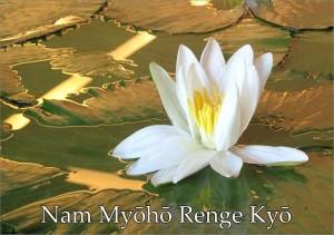 Nam Myoho Renge Kyo - Fotografía de la flor de loto de Jenny Mackness